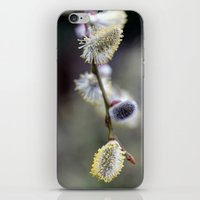 Bursting Buds Bowing in the Back Garden iPhone & iPod Skin