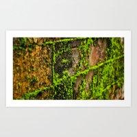 Moss Wall Art Print