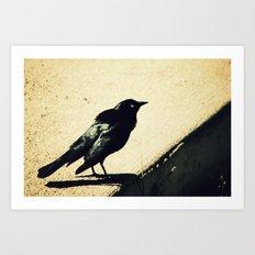 Little Blackbird Art Print