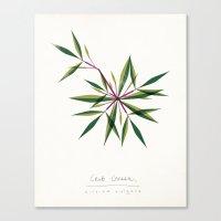 Crab Grass Modern Botanical Canvas Print