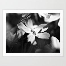 Petals - Black and White Floral Photo Art Print
