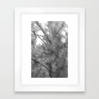 Treeage I - BW Framed Art Print
