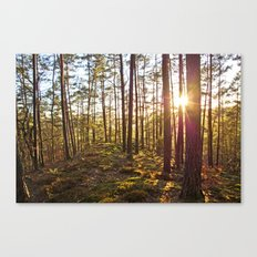 Evening In The Forest Canvas Print