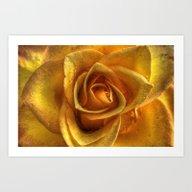 Glowing Rose Art Print