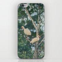 White Ibis Birds Roost Lake Waccamaw Green Swamp NC iPhone & iPod Skin