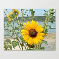 Grabbing some sun Canvas Print
