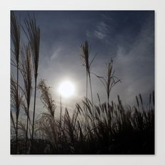 Beautiful Sunset In The Field Canvas Print