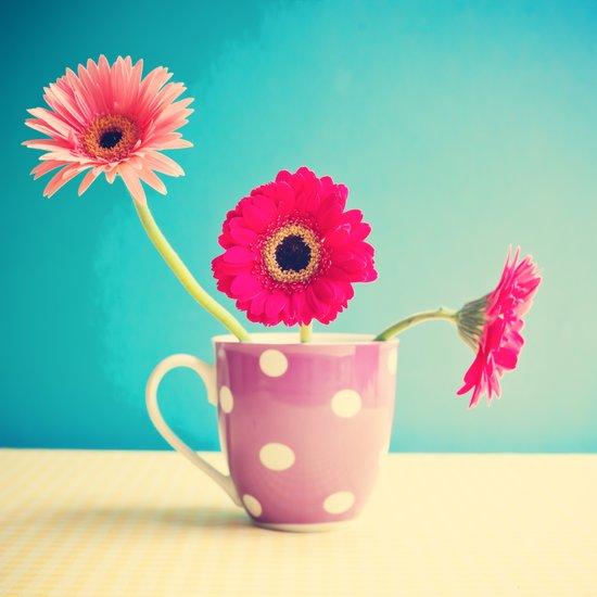 Pink Flowers Gerbers on Blue  Art Print