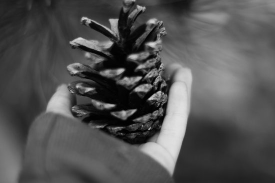 A Pinecone For You Art Print