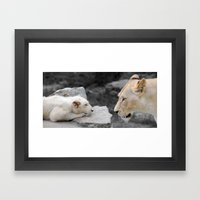 A Mothers Love . . . White Lion Mother and her Cub    Framed Art Print