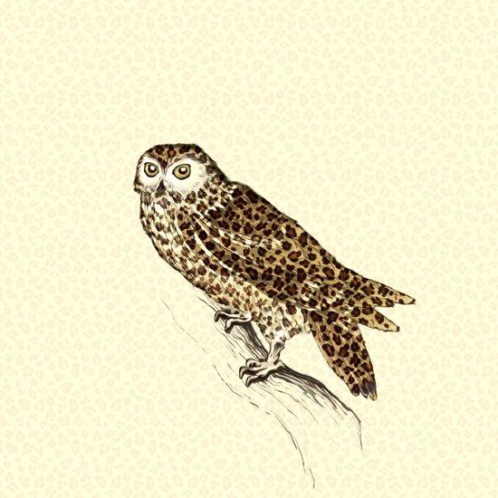 The Jaguar Owl Art Print