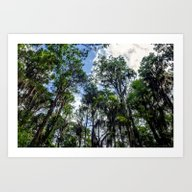 Art Print featuring Swamp Trees With Moss by JMcCool