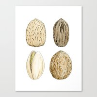 Edible Nuts Canvas Print