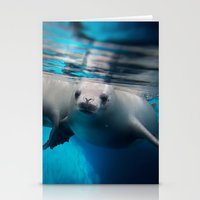 SEA LION Stationery Cards