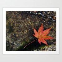 Japanese Maple Leaf 1 Art Print