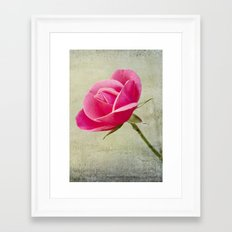 Virgin Rose Framed Art Print
