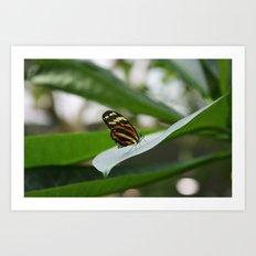 Butterfly House 3 Art Print