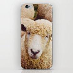Cotswold Sheep iPhone & iPod Skin