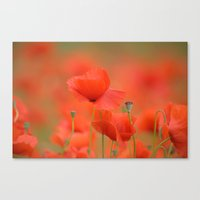 Common red poppies 1876 Canvas Print