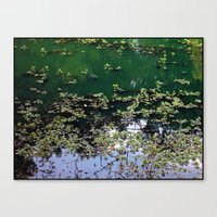 Afternoon At The Pond Canvas Print