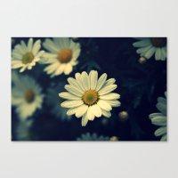 Fresh Daysies Flowers 09… Canvas Print