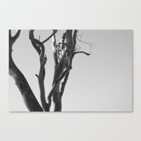 Now You See The Tree Canvas Print