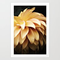 Lioness - Apricot Dahlia Art Print
