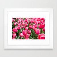 Nature Photography, Botanical Fine Art, Tulip Print, Pink Wall Art, Flower Photo, Field of Tulips Framed Art Print
