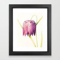 VIII. Vintage Flowers Botanical Print by Pierre-Joseph Redouté - Lilac Tulip Framed Art Print