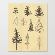 Pines and Spruces Canvas Print