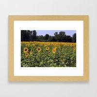 Field Of Sunflowers Colo… Framed Art Print