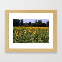 Field Of Sunflowers Colo… Framed Art Print