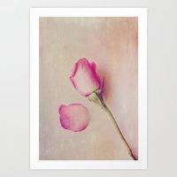 Hazy Rose Art Print