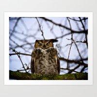 The Disgruntled Owl (Ori… Art Print