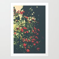 Summer Roses Series  - I… Art Print