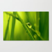 The essence of green Canvas Print