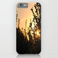iPhone & iPod Case featuring Apple Orchard at Sunset by Joëlle Tahindro