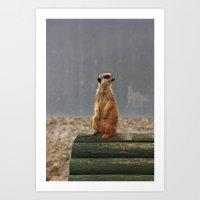 Meerkat No.1 Art Print