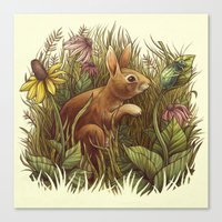 The Cottontail And The K… Canvas Print