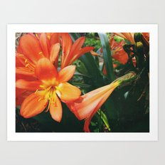 Orange flowers Art Print