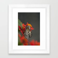 Wings of Nature Framed Art Print
