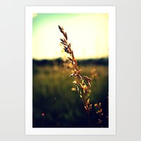 Prairie Wild - Color Art Print