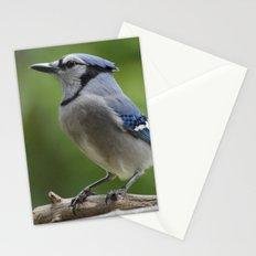 A Northern Blue Jay Stationery Cards
