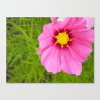 Bright Pink Flower Canvas Print