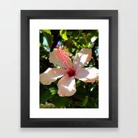 Hibiscus IV Framed Art Print