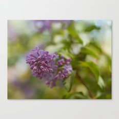 Lilac Time Canvas Print
