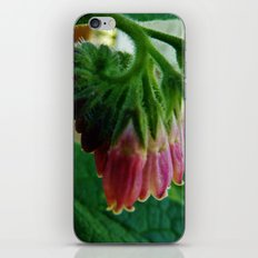Comfrey iPhone & iPod Skin