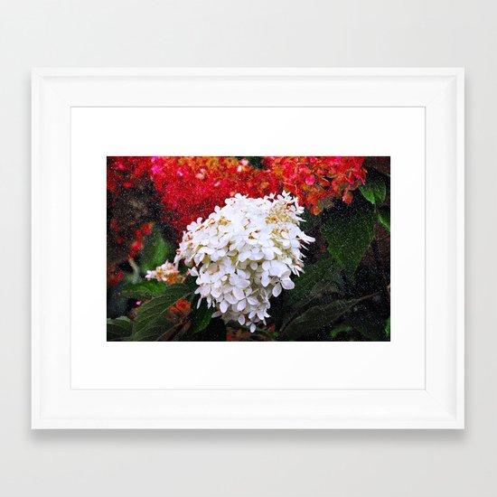 Christmas Colours  Framed Art Print