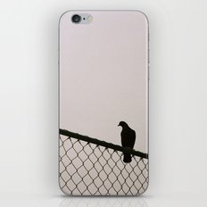 Pigeon Fence iPhone & iPod Skin