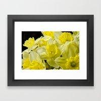 Simply Daffodils Framed Art Print